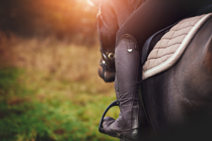 The Complete Guide to Horse Riding for Rookies